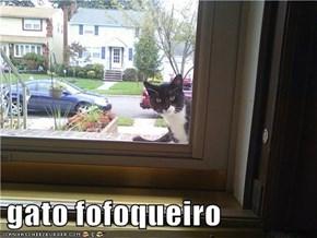 gato fofoqueiro