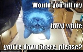 Would you fill my bowl while you're down there, please?