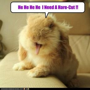 He He He He  I Need A Hare-Cut !!