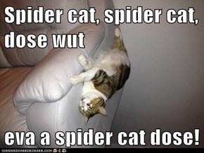 Spider cat, spider cat, dose wut  eva a spider cat dose!