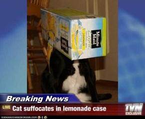 Breaking News - Cat suffocates in lemonade case