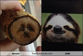 banana  Totally Looks Like sloth