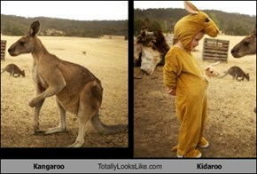 Kangaroo Totally Looks Like Kidaroo