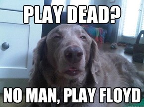 Stoned Dog LOVES Dark Side of the Moon