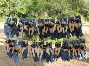 Pups in Pants
