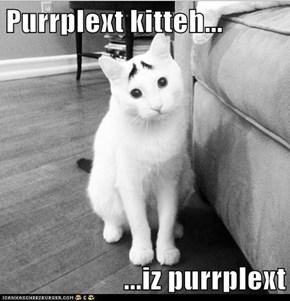 Purrplext kitteh...  ...iz purrplext