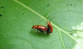 Hell Yeah Bug!