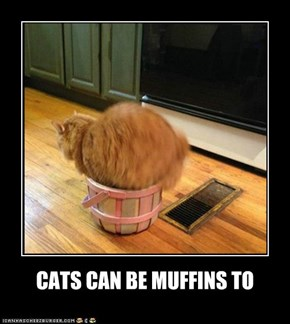 CATS CAN BE MUFFINS TO