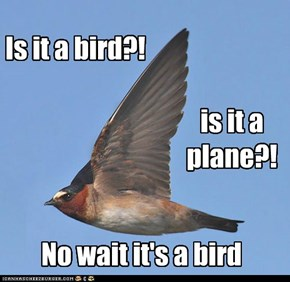 Definitely a bird