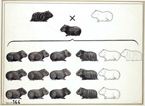 Mendel's Genetics Illustrations