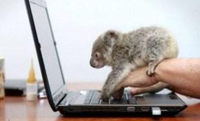 Koala Learning to Computer