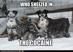 WHO SNEEZED IN