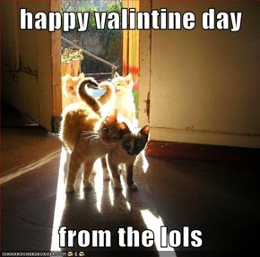 happy valintine day  from the lols