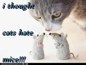 i thought  cats hate mice!!!