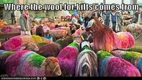 Where the wool for kilts comes from