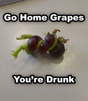 Looks Like You Became Wine a Little Early