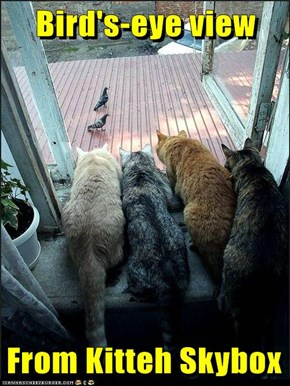 Bird's-eye view  From Kitteh Skybox