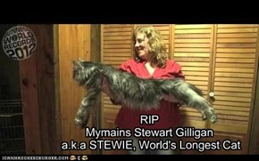 RIP Mymains Stewart Gilligan  a.k.a STEWIE, World's Longest Cat