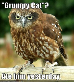 """Grumpy Cat""?  Ate him yesterday."
