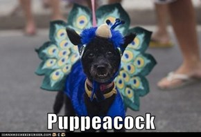 Puppeacock