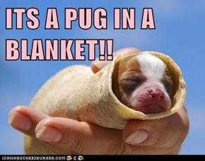 ITS A PUG IN A BLANKET!!