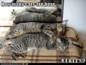 How many cats are here ...  R E A L L Y ?