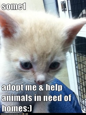 some1  adopt me & help animals in need of homes:)