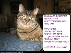 Frum Catz Clazzified: Help Wanted