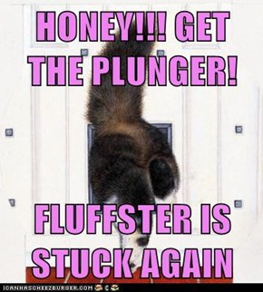HONEY!!! GET THE PLUNGER!  FLUFFSTER IS STUCK AGAIN