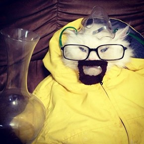 This Breaking Bad Cat Respects the Chemistry. Do You?