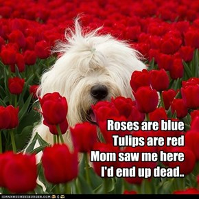 Roses are blue Tulips are red Mom saw me here I'd end up dead..