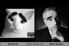 Worried Cat Totally Looks Like Martin Scorsese