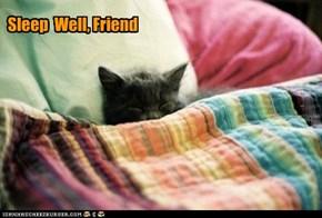 sleep well, Friend
