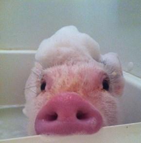 Piggy Bath