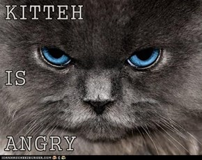 KITTEH IS ANGRY
