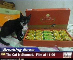 Breaking News - The Cat Is Stunned.  Film at 11:00
