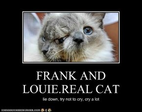 FRANK AND LOUIE.REAL CAT