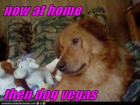 now at home  then dog vegas