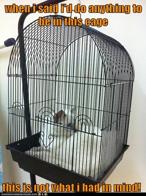 when i said i'd do anything to be in this cage  this is not what i had in mind!