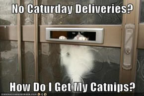 No Caturday Deliveries?  How Do I Get My Catnips?