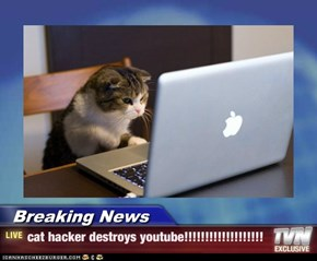 Breaking News - cat hacker destroys youtube!!!!!!!!!!!!!!!!!!!
