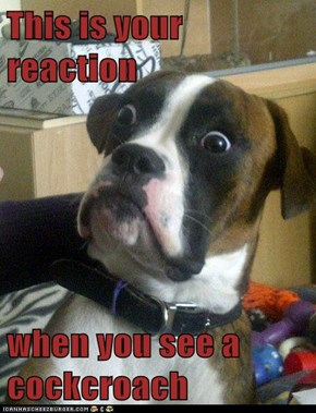 This is your reaction  when you see a cockcroach