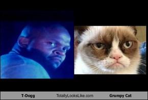T-Dogg Totally Looks Like Grumpy Cat