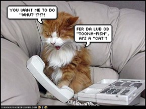 Ai'z a CAT!