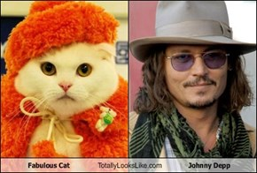 Fabulous Cat Totally Looks Like Johnny Depp