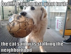 Dad!!! I caught that giant turtle  the cat said was stalking the neighborhood