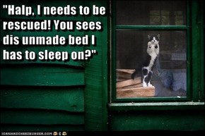 """""""Halp, I needs to be                                                     rescued! You sees                                                     dis unmade bed I                                                     has to sleep on?"""""""