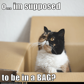o... im supposed  to be in a BAG?