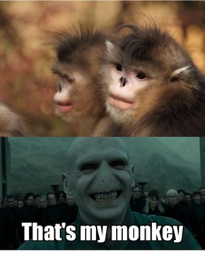 That's My Monkey
