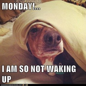 MONDAY!...  I AM SO NOT WAKING UP